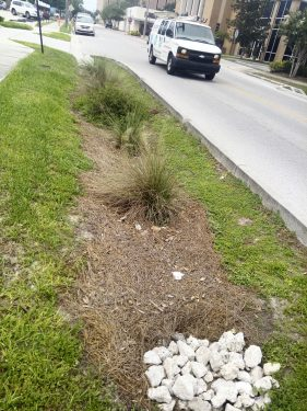 Photo of a Rain Garden on Ave A NW, Winter Haven, FL.